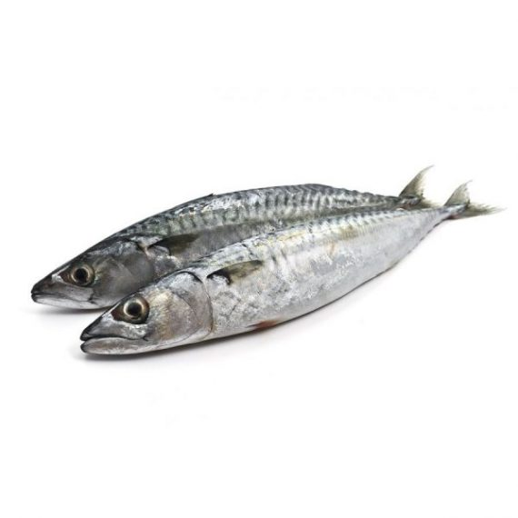 Poisson Thomson, Poisson Chinchard, Horse Mackerel