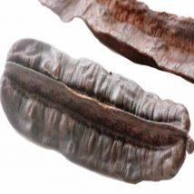 Esesè, 4 cotés, linja ou cc: fruit du Tetrapleura tetraptera